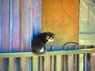 A cat – Antsirabe, Madagascar