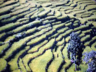 Rice Terraces – Bahundanda, Nepal
