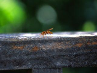 Bee – Suchitoto, El Salvador