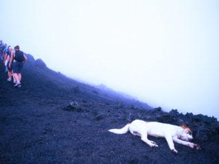 Tired Dog – Pacaya Vulcan, Guatemala