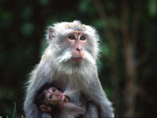 Maternity – Bali, Indonesia