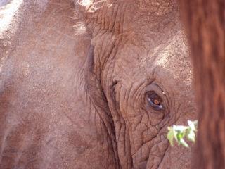 Menacing Elephant, Lake Manyara, Tanzania