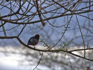 A Bird – Lake Manyara, Tanzania