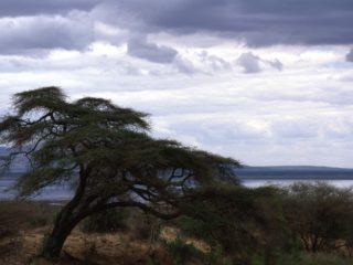 Tree – Tarangire, Tanzania