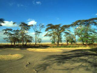 Trees, Ngorongoro, Tanzania