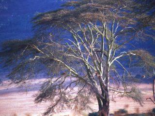 Trees 3 – Ngorongoro, Tanzania