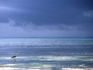 Heron – Zanzibar, Tanzania