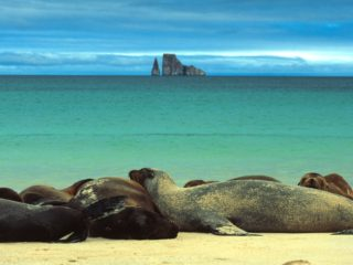 Sea Lions Sunbathe, Galapagos Islands